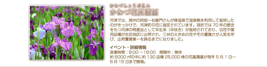 かわづ菖蒲園
